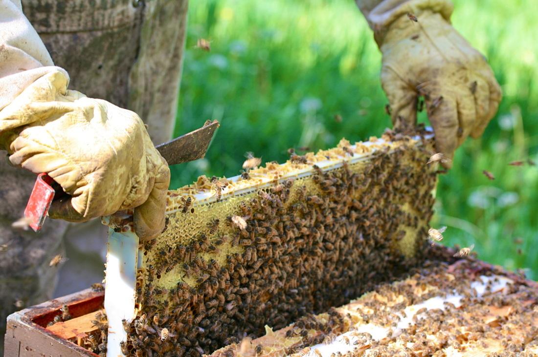 fallentimber beekeeper